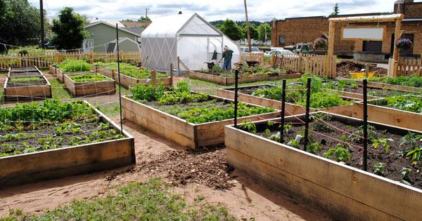 spiff-incubator-farm-v3