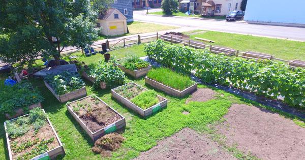 spiff-school-garden-site
